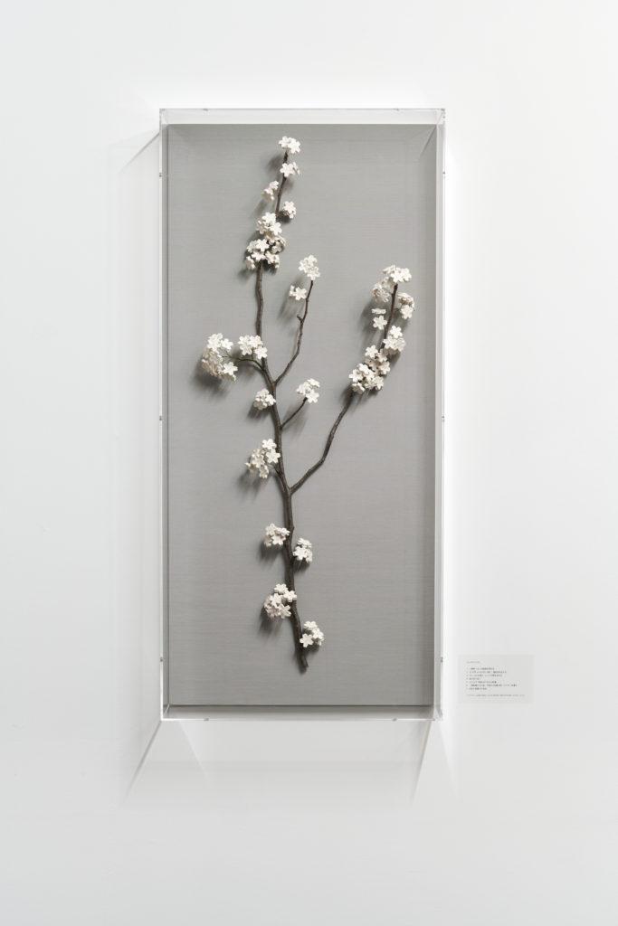 Synchronized Cherry Blossom